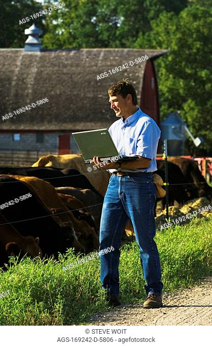 Agriculture - A livestock producer stands on a farm road observing his herd of beef cattle and enters data into his laptop computer / near Hoffman, Minnesota