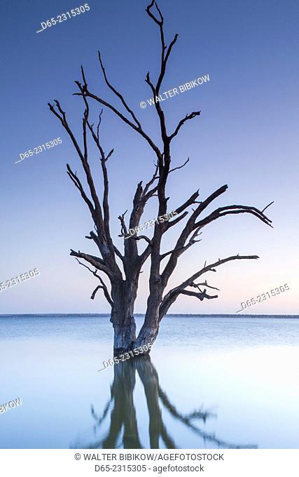 Australia, South Australia, Murray River Valley, Barmera, Lake Bonney, petrified trees, dawn