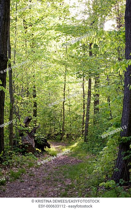 A path through the sunlit woods in the Cuyahoga Valley in Ohio