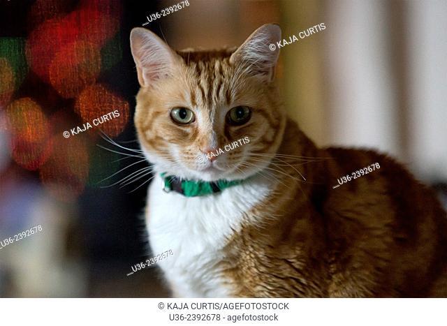 Annie the Cat