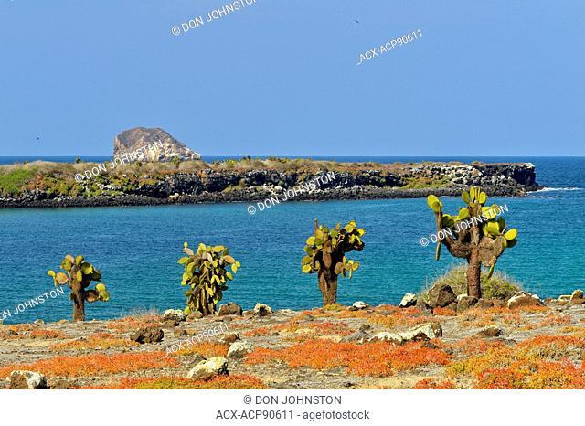 North Plaza island from South Plaza island, Galapagos Islands National Park, South Plaza Island, Ecuador