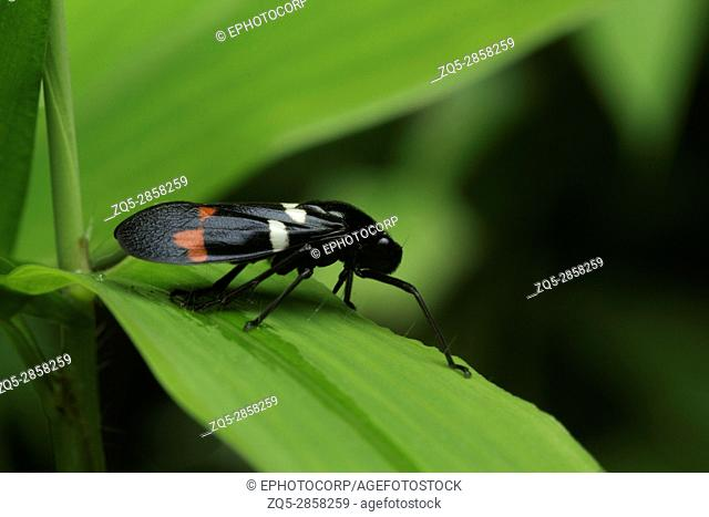 Insect , Unidentified , Aarey Milk Colony , INDIA