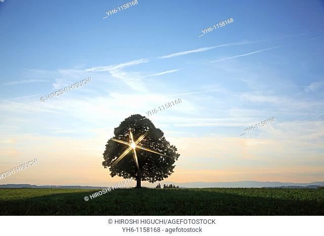 Single tree with sunbeam, Switzerland, Canton Lucerne, Emmental