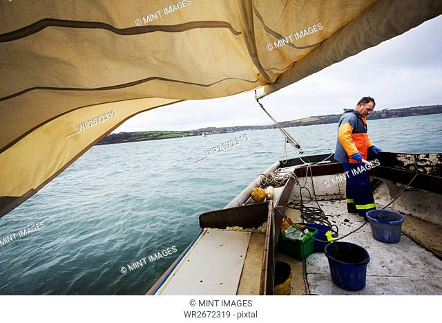 Traditional Sustainable Oyster Fishing. A fisherman on a sailing boat