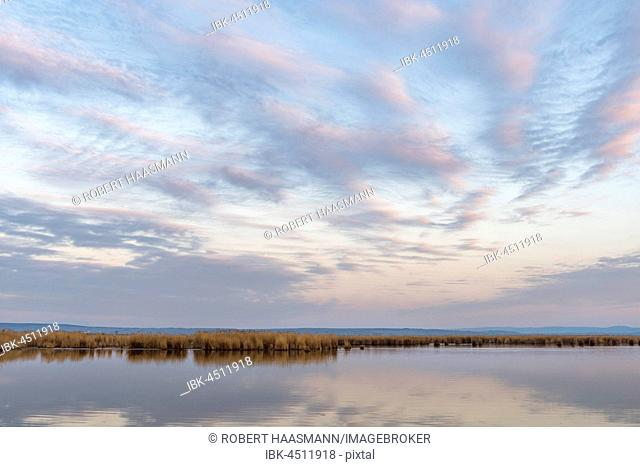 Lakescape with reed beds, morning atmosphere, Illmitz, Lake Neusiedl, Burgenland, Austria
