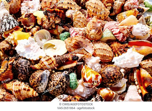Hainan, China - The view of many colorful seashell on the ground