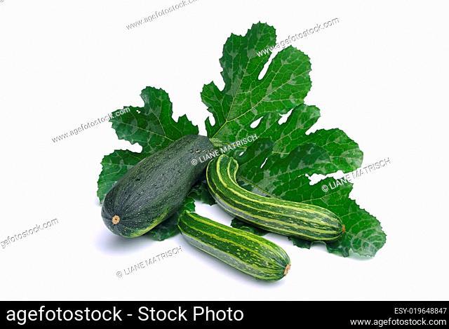 Zucchini - courgette 08
