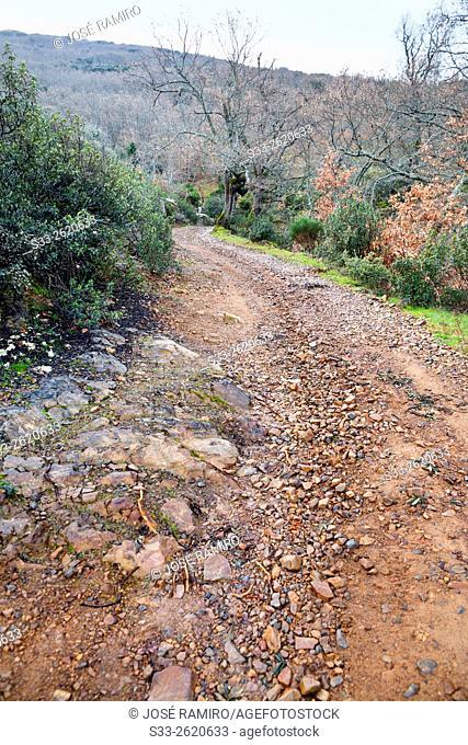 Marches pass road in the Montes de Toledo. San Pablo de los Montes. Toledo. Castilla la Mancha. Spain. Europe