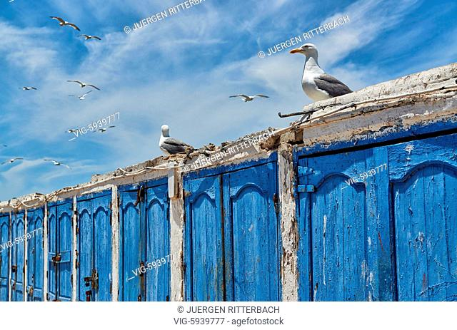 MOROCCO, ESSAOUIRA, 27.05.2016, locked wooden blue doors in row from fishery equipment sheds in port of Essaouira, UNESCO world heritage site, Morocco
