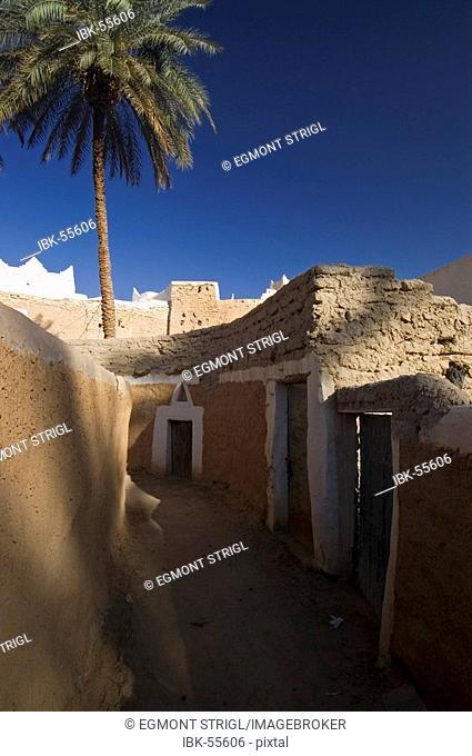 Palm garden at Ghadames, Ghadamis, Libya, Unesco World Heritage Site