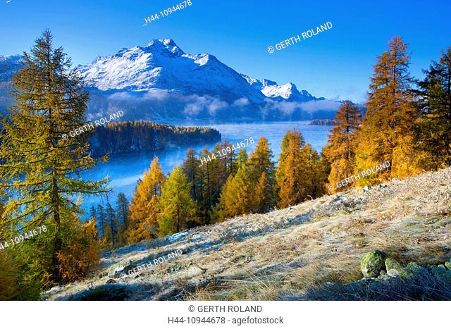 Lake Sils, Switzerland, Europe, canton, Graubünden, Grisons, Engadin, Engadine, Oberengadin, lake, mountain lake, morning light, larches, trees, mountain