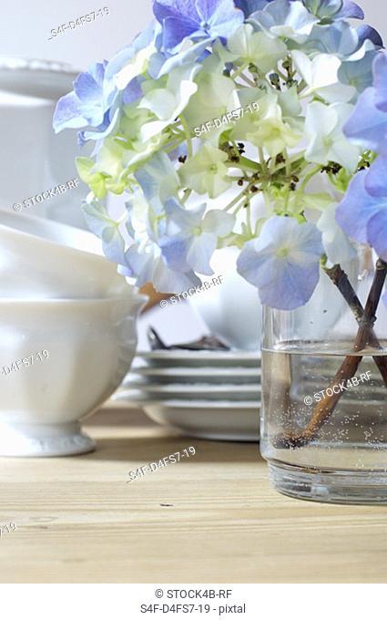 Twig of hydrangea in a vase