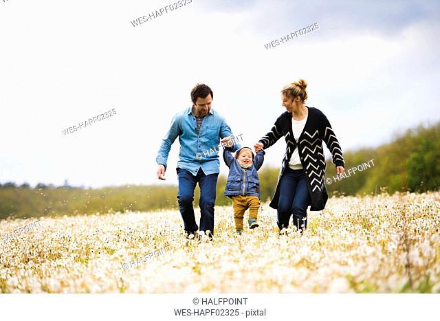 Parents walking with little boy in dandelion field