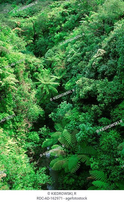 Tree fern Whanganui national park North Island New Zealand