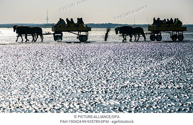 20 April 2019, Lower Saxony, Cuxhaven: At low tide, horse-drawn carriages with several people are pulled from Cuxhaven through the Wadden Sea to the island of...