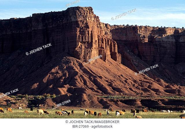 USA, United States of America, Utah: pastureland near Torrey