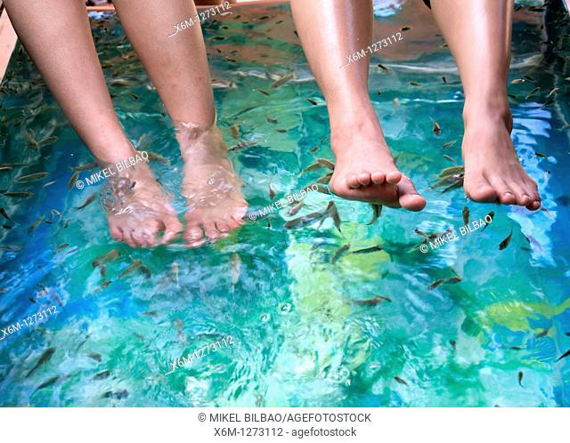feet on a fish massage tank  Siem Reap, Cambodia, Asia