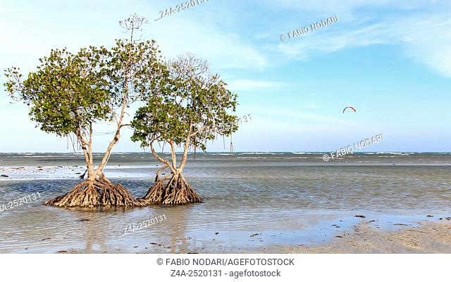 Mangroves on a beach of Puerto Princesa, Palawan in the Philippines