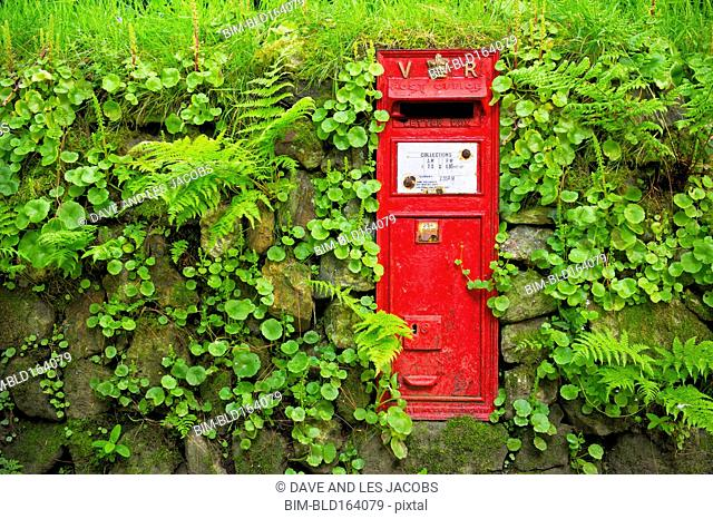 Vintage mail box in mossy rock wall