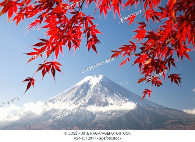 Momiji (Acer palmatum) leaves, Mount Fuji, Japan