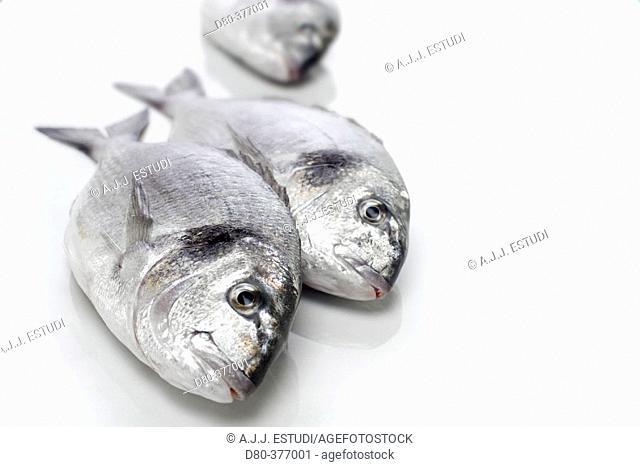 Sea breams