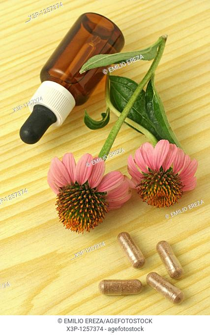 Purple coneflowers pills and extract Echinacea purpurea