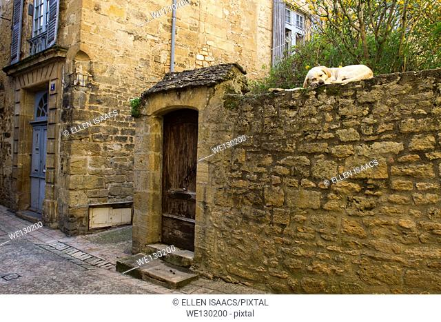 Labrador Retriever dog sleeping on an old stone wall along a narrow cobblestone street, camouflaged by the sandstone, Sarlat, Dordogne region of France