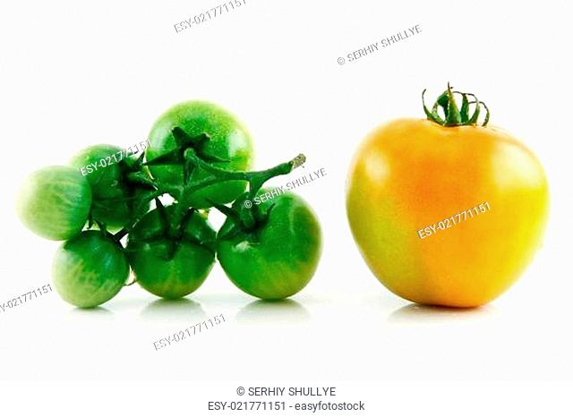 Ripe Wet Yellow and Green Tomatoes Isolated on White