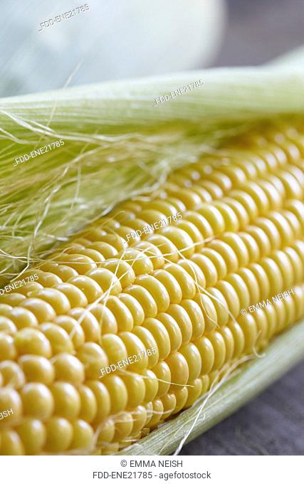 Close Up Of Fresh Sweetcorn On Cob