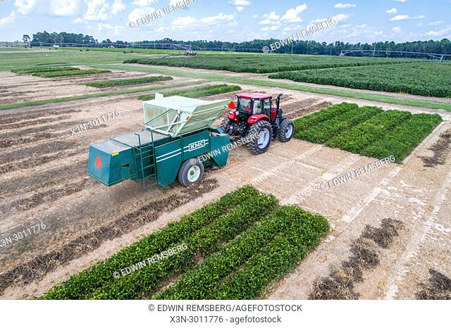 Aerial view of combine harvester driving up row to collect dried peanuts, Tifton, Georgia. USA