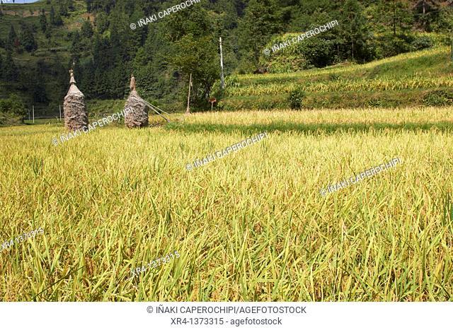 Goals of straw, Bala River Valley, Langde, Guizhou, China