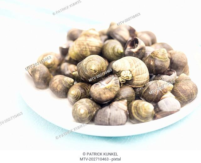 Fresh common periwinkle on plate