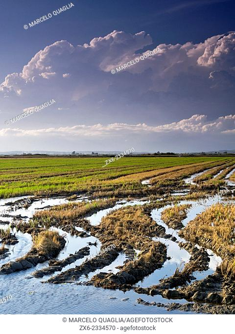 Harvested rice fields. Ebro River Delta Natural Park, Tarragona province, Catalonia, Spain