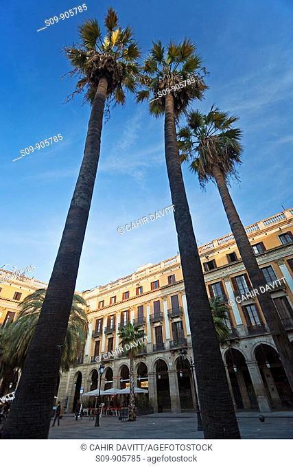 Spain, Cataluna, Barcelona, Ciutat Vella, Placa Reial and 3 palm trees