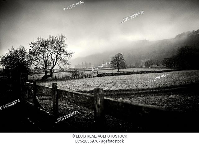 Rural landscape at sunset with trees on a foggy day. Buckden, Skipton, Yorkshire Dales, North Yorkshire, England, UK