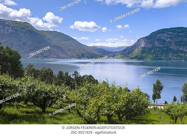 Orchard at the shore of Ornes, Norway, Lustrafjorden from above, Sognefjorden