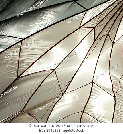 A White Silk Parachute looks like an insects wing as it is backlit by the sun