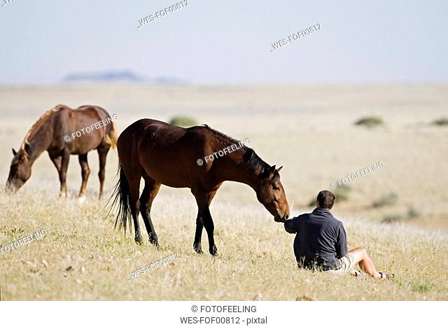 Africa, Namibia, Aus, Tourist and wild horses