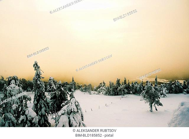 Forest on snowy remote mountain