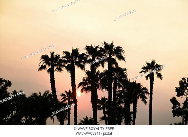 Palm trees at sunset, Santa Barbara California