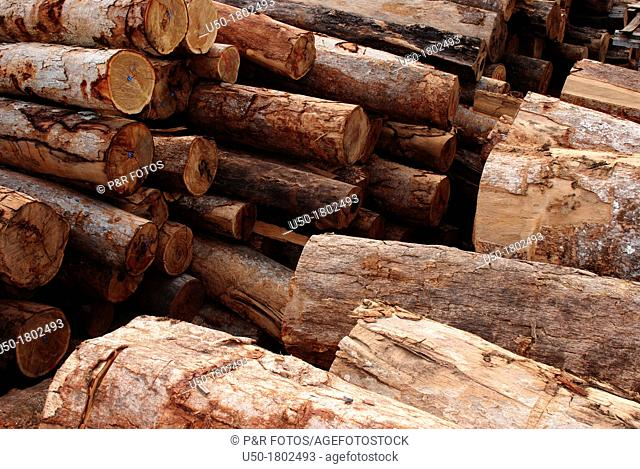 Pile of wood logs in a legal sawmill, Rio Branco Acre, Brasil, 2011