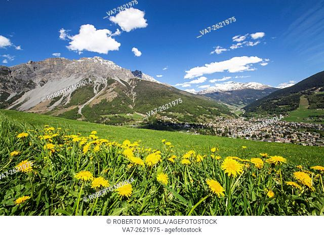 The colors of spring flowering with the village of Bormio in the background Upper Valtellina Lombardy Italy Europe