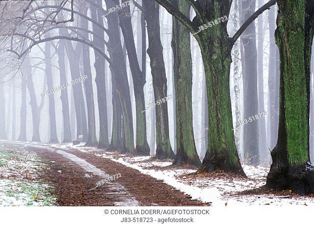 Small way through trees, Chemnitz, Saxony, Germany