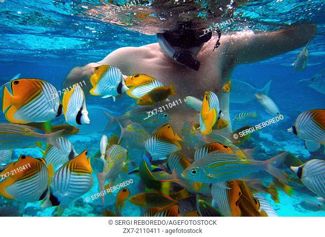 Rarotonga Island. Cook Island. Polynesia. South Pacific Ocean. Diving in the lagoon with The big fish, Diving Centre in Rarotonga