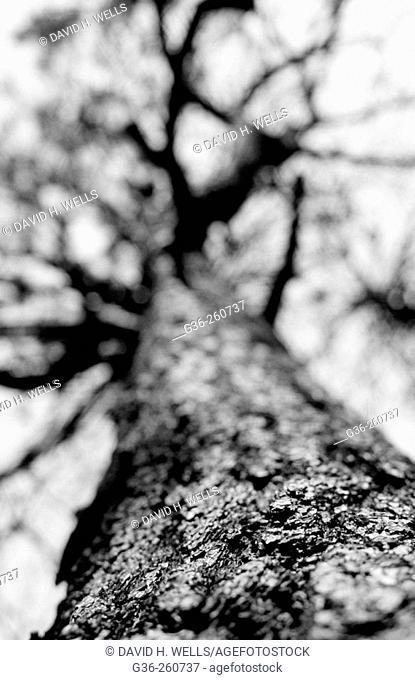 Tree burned