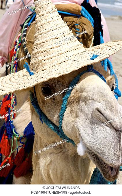 Tunesia, Djerba, Midoun, portrait of beach camel