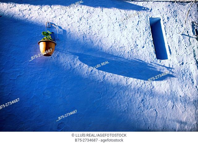 Blue wall, window and flowerpot with a plant. Chaouen, Morocco