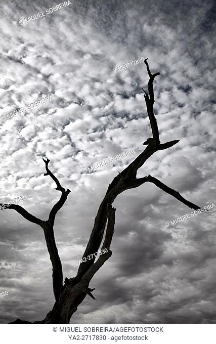 Bare Tree Branches Sky