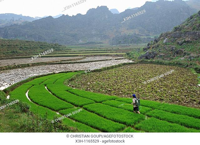 paddy-fields around Dong Van,Ha Giang province,northern Vietnam,southeast asia