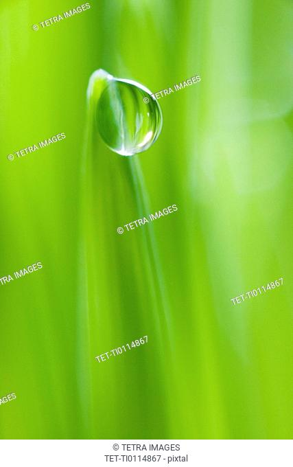 Drop of water on blade of grass